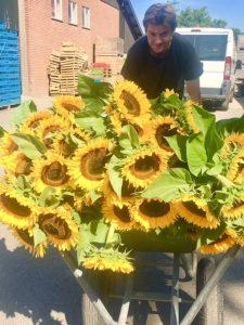 Buytenhof zonnebloemen