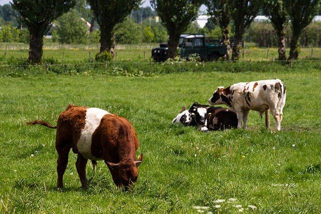 Vlees van de boer